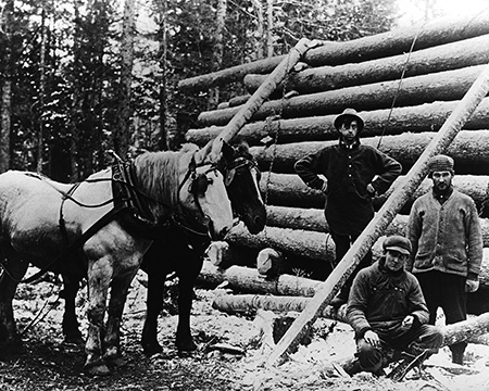 horse loggers